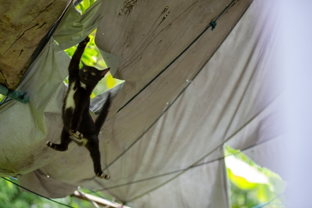 Black kitten Fall out of the canvas roof Zdjęcie Seryjne