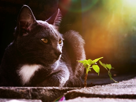 kitten black Dodge the tree small