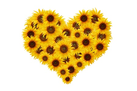 Heart shape with sunflowers for your design, isolated on white background. photo