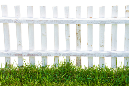 picket green: Old wood white fence and green grass.