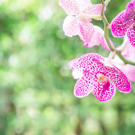 Purple or pink orchid flowers in garden, Orchids decoration.
