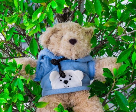 Teddy Bear in the grass is a lovely bear for those who love teddy bears.