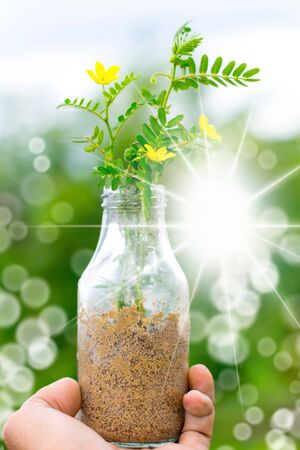 Tree in a glass bottle on a bokeh tree blury background with a colorful atmosphere using ads nature image for refreshing of life.