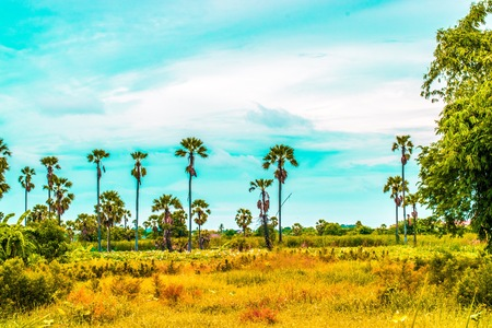 Coconut trees with mountains and sky background.  Using wallpaper nature photo.