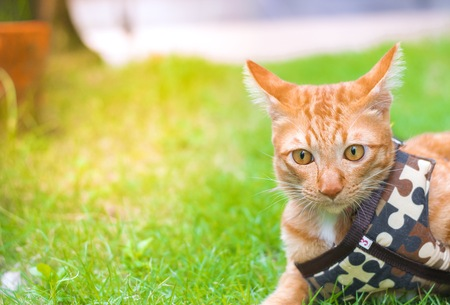 Cute cats are playing in the house on  lawn. using wallpaper or background for animal  image.