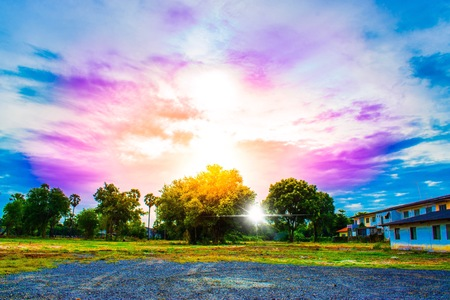 The sun behind the tree with blue sky on a forest background in nature using wallpaper or background for landscape and daylight image.