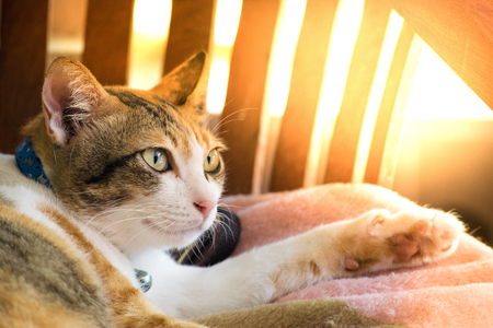 eye ball: Cute cats are playing in the house on  lawn. using wallpaper or background for animal  image.