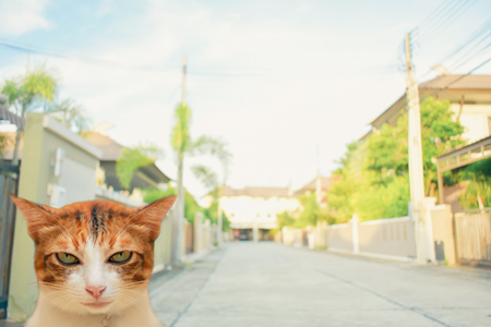 Thai cat smile on the field on blurred tree background for animal image