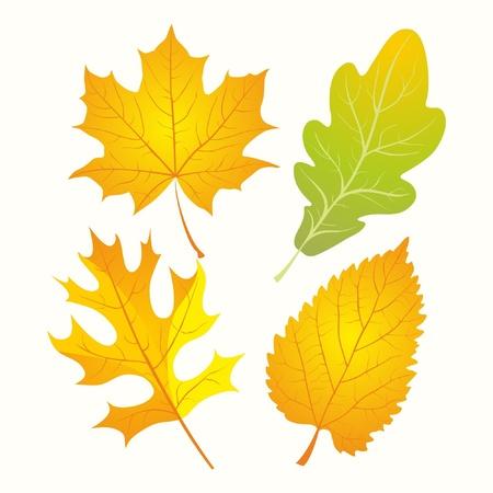 elm: Autumn Leaves