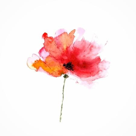 amapola: Amapola Acuarela floral Ilustración floral elemento Vector floral de fondo rojo de la flor decorativa