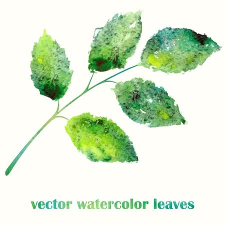 녹색 분기 수채화 여름 그림 나뭇잎