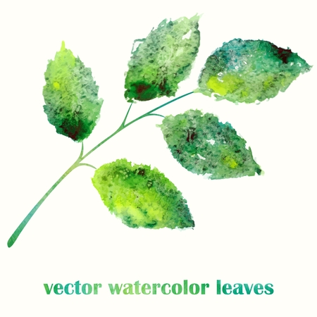 Branch with green leaves  Watercolor summer illustration