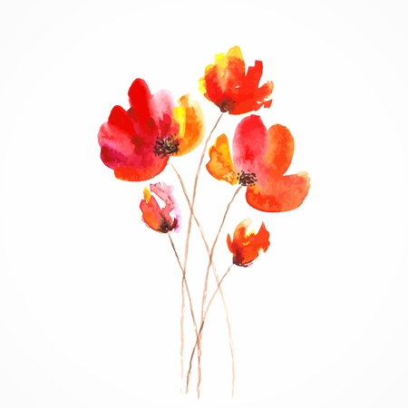 gently: Red flowers  Poppies  Watercolor floral illustration  Floral bouquet  Vector floral background  Birthday card  Illustration
