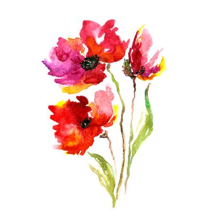 붉은 꽃 양귀비 수채화 꽃 장식 꽃 꽃다발 꽃 배경 생일 카드 스톡 콘텐츠