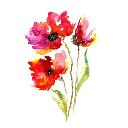 Red flower  Poppy  Watercolor floral decoration  Floral bouquet  Floral background  Birthday card  photo
