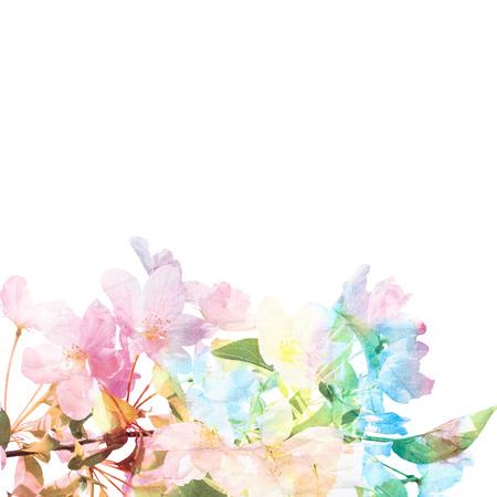 Floral background Sakura Aquarelle florale bouquet carte Banque d'images - 27491458