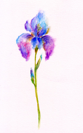 Watercolor illustration of Iris flower Stock Photo