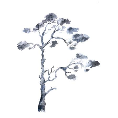 Pine. Watercolor tree. photo