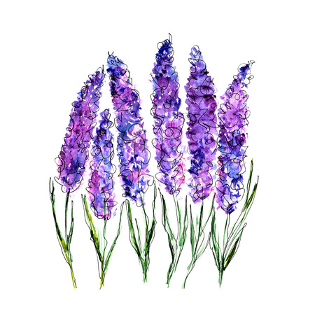 Lavender flowers Watercolor floral background.