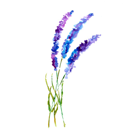 Lavender flowers Watercolor floral background. photo