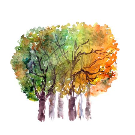 genealogical: Autumn trees.