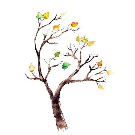 秋の木の水彩画の画像。