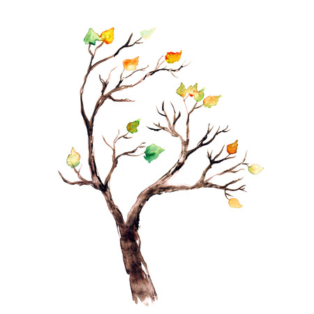 Autumn tree Watercolor picture.