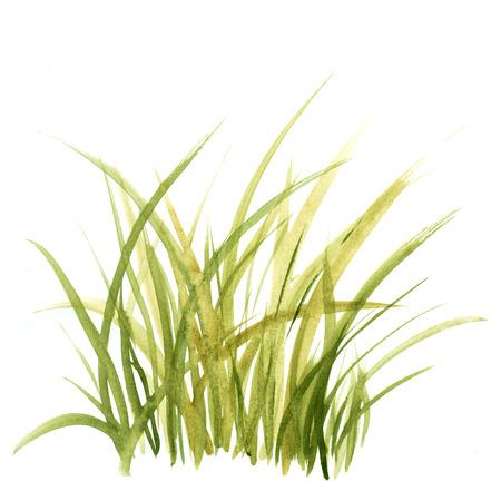 L'herbe verte. Floral background. Banque d'images - 33446302