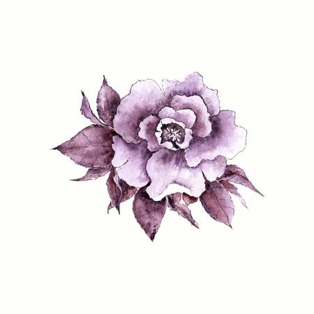 Vintage rose. fleur d'aquarelle. Tiré par la main de fleurs. Banque d'images - 40805591