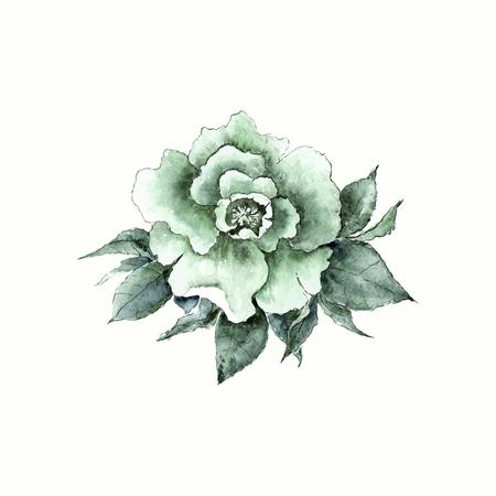 transparently: Vintage rose. Watercolor flower. Hand drawn flower.