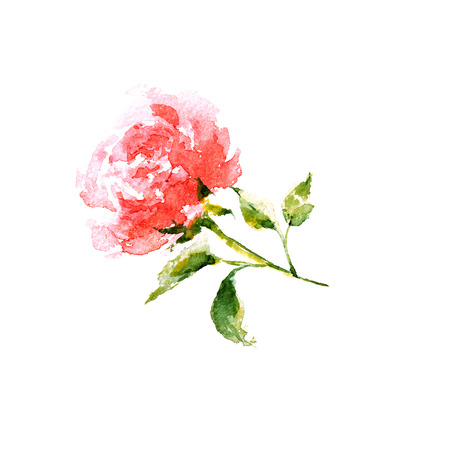 transparently: Rose. Watercolor floral card. Birthday card with rose.