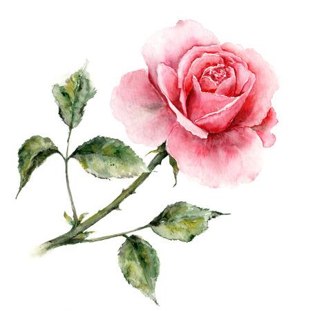 Rosa. Acquerello carta floreale. Scheda di compleanno con rosa. Archivio Fotografico - 50790979