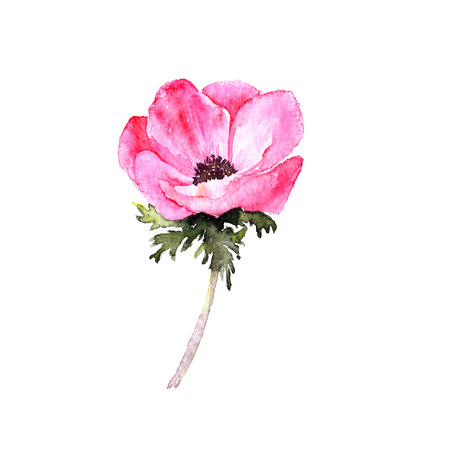 Single flower. Watercolor flower. Greeting card. Wedding invitation template. Floral card. Pink spring flowers. Anemone. Watercolor floral wall art painting for home decor.