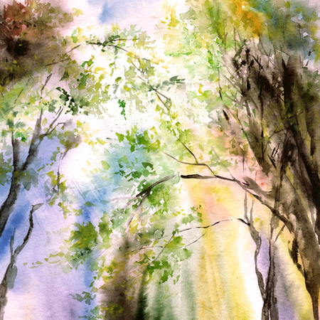 Watercolor landscape. Spring. Sunbeams falling through the trees. Painting forest. Banco de Imagens