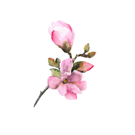 Magnolia flower. Watercolor flower. Floral branch with pink flowers. Wedding invitation floral design. Spring greeting card. Imagens