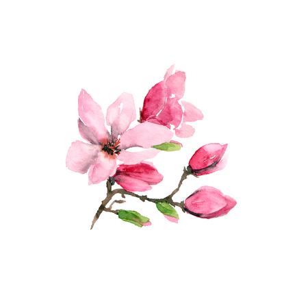 Magnolia flower. Watercolor flower. Floral branch with pink flowers. Wedding invitation floral design. Spring greeting card. Banco de Imagens