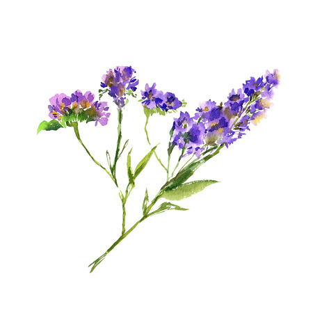 Floral bouquet. Birthday greeting card with purple flowers. Watercolor violet flowers. Wedding invitation floral design. Lavender branch.