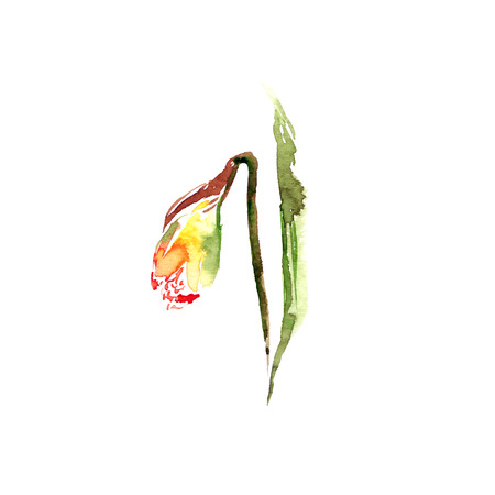 Narcissus. Watercolor drawing with spring flowers. Floral greeting card. Spring flower bouquet.