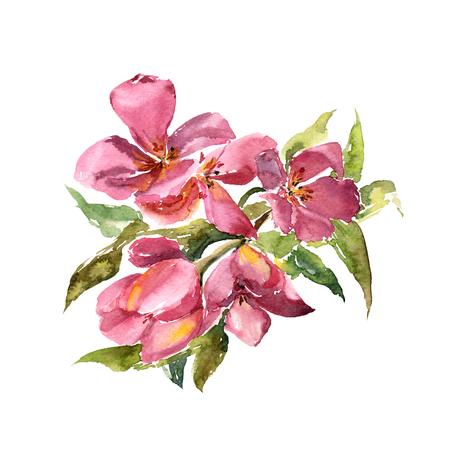 Pink tulips. Watercolor flowers. Floral greeting card. Wedding invitation design. Sakura blossom.