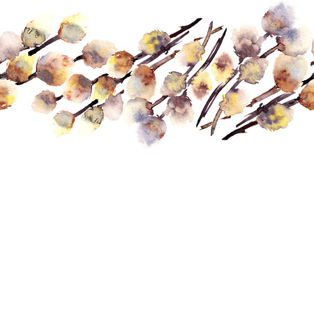 Pussy-willow. Easter postcard. Watercolor drawing of branch of pussy-willow.