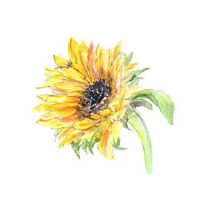 Drawing sunflower. Yellow sunny flower.