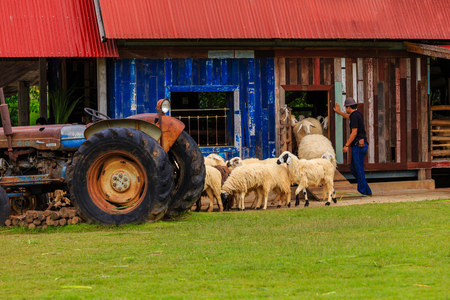 wensleydale: Sheep and Livestock in Thailand