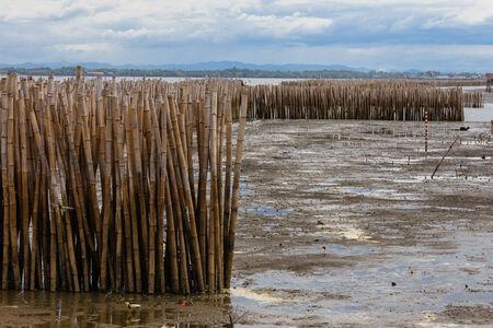 sandbar: Bamboo at Sandbar , Long Tail Boat , Don Hoi Lot,  Samutsongkram in Thailand  Stock Photo