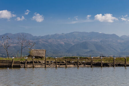 Hut   Bird ,  inle lake in Myanmar  Burmar  photo