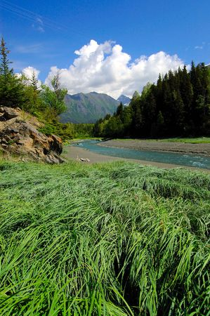 calving: Near Anchorage, Alaska, on Hwy 1, river, mountains, meadows and greenery.