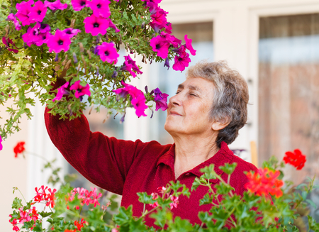pelargonium: Happy old lady smell her colorful flowers Stock Photo