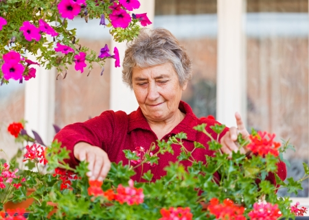 age care: Happy old lady with her colorful flowers Stock Photo