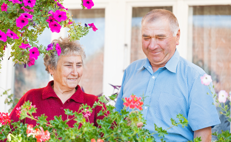 pelargonium: The elderly couple admire their colorful flowers Stock Photo