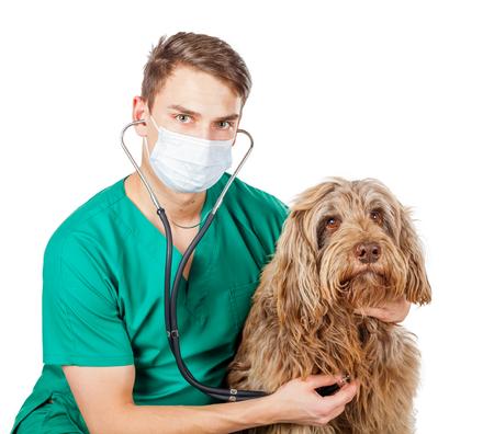 half breed: Handsome veterinarian doctor examining a puli dog