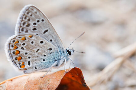 Close up photo of a beauty butterfly photo